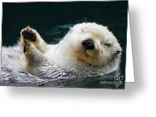 Napping On The Water Greeting Card