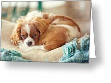 Napping Puppy Greeting Card by Kay Pickens