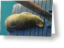 Napping Sea Lion Greeting Card