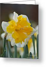 Narcissus 014-2 Greeting Card