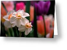 Narcissus And Tulips Greeting Card