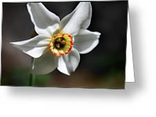 Narcissus II Greeting Card by Aya Murrells