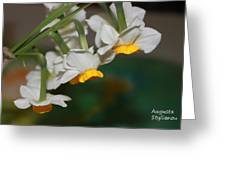Narcissus Profile Greeting Card