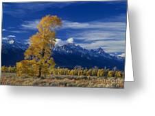 Narrowleaf Cottonwoods Fall Color Teton Greeting Card