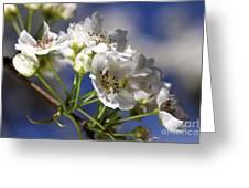 Nashi Pear Greeting Card