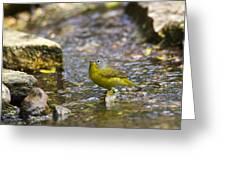 Nashville Warbler Greeting Card