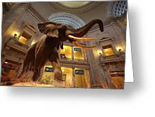 National Museum Of Natural History Greeting Card