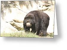 National Zoo - Bear - 12121 Greeting Card