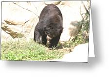 National Zoo - Bear - 12123 Greeting Card by DC Photographer