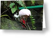 National Zoo - Birds - 01131 Greeting Card