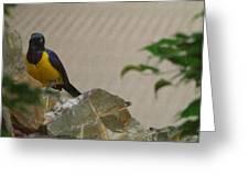National Zoo - Birds - 01137 Greeting Card