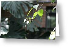 National Zoo - Butterfly - 12124 Greeting Card
