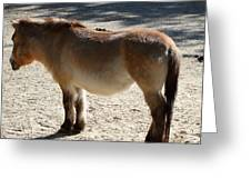 National Zoo - Donkey - 01134 Greeting Card by DC Photographer