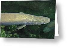 National Zoo - Fish - 12125 Greeting Card