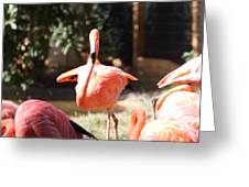 National Zoo - Flamingo - 01133 Greeting Card by DC Photographer