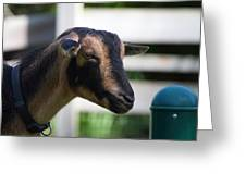 National Zoo - Goat - 01132 Greeting Card