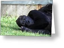 National Zoo - Gorilla - 011339 Greeting Card