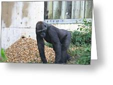 National Zoo - Gorilla - 121242 Greeting Card by DC Photographer