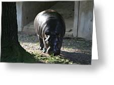 National Zoo - Hippopotamus - 12121 Greeting Card