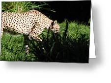 National Zoo - Leopard - 011311 Greeting Card