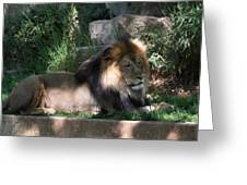 National Zoo - Lion - 011317 Greeting Card