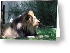 National Zoo - Lion - 011318 Greeting Card
