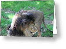 National Zoo - Lion - 01132 Greeting Card