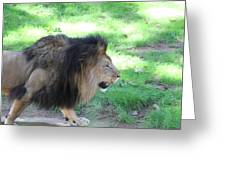 National Zoo - Lion - 01135 Greeting Card