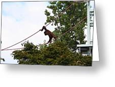 National Zoo - Orangutan - 01135 Greeting Card