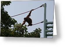 National Zoo - Orangutan - 12122 Greeting Card by DC Photographer