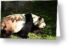 National Zoo - Panda - 011328 Greeting Card