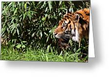 National Zoo - Tiger - 011312 Greeting Card