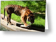 National Zoo - Tiger - 011319 Greeting Card