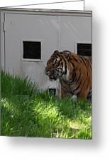 National Zoo - Tiger - 011323 Greeting Card