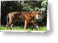 National Zoo - Tiger - 01138 Greeting Card