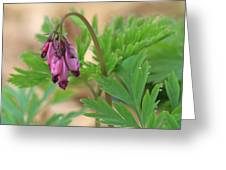 Native Bleeding Hearts Greeting Card