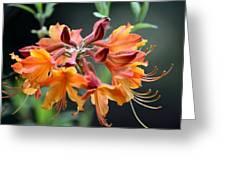 Native Flame Azalea I Greeting Card
