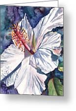 Native Hawaiian Hibiscus Greeting Card