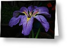 Native Louisiana Iris Greeting Card