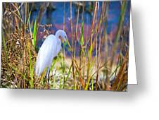 Natural Beauty Greeting Card
