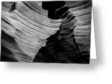 Natural Beauty Of Antelope - Black And White Greeting Card