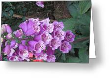 Natural Bouquet Bunch Of Spiritul Purple Flowers Greeting Card
