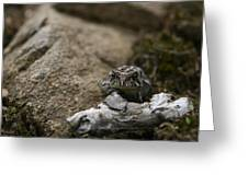 Natural Expression Of A Fowler Toad  Greeting Card