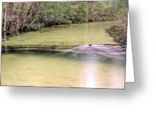 Natural Florida Greeting Card