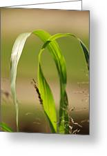 Natural Grass Greeting Card