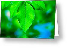 Natural Leaves Background Greeting Card