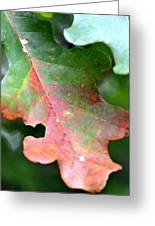 Natural Oak Leaf Abstract Greeting Card