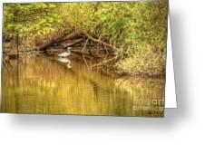 Natural Reflection Greeting Card