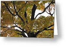 Natural Sunburst Through Autumn Tree Greeting Card
