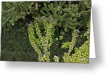 Natural Textures Greeting Card